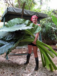 Gardening with a machete:  Outside my house in Costa Rica, 2010